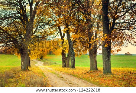 Autumn alley with yellow leaves