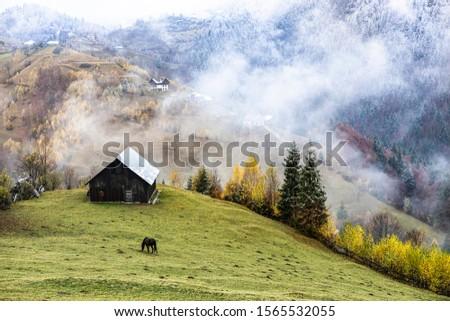 Autumn alpine landscape, alpine village with spectacular gardens and high snowy mountains in background near Bran, Magura, Transylvania, Romania. #1565532055