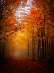 Autumn and fall colors. Colorful leaves falling from tree branches. Yedigoller National Park. Bolu, Istanbul. Turkey.