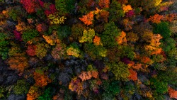 Autumn and fall scenic landscapes of the Greater Napanee and Kingston areas featuring forests of maple and oak along with abandoned homes and rural scenes of waterscapes and arial photography.