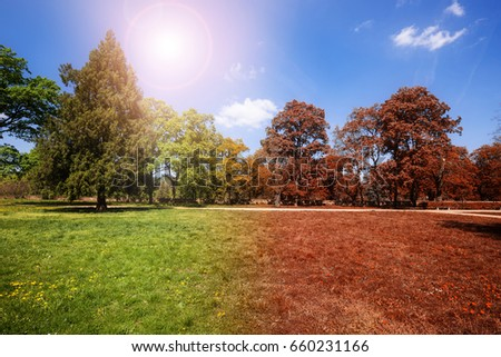 Autumn and summer park at sunny day