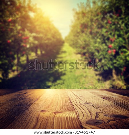 autumn apple orchard background  #319451747
