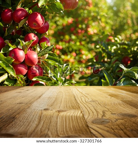 autumn apple orchard background  #327301766