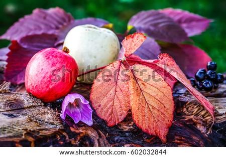 Autumn apples, autumn leaves #602032844