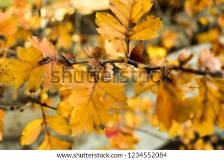 Autumn Armenia Yerevan Yellow #1234552084