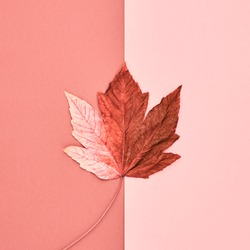 Autumn Arrives. Fall Background. Fashion Design. Art gallery creative flat lay. Minimal. Maple leaf on coral pink. Vintage fashionable autumnal concept