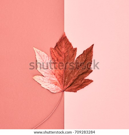 Autumn Arrives. Fall Background. Fashion Design. Art Gallery. Flat lay. Minimal. Maple leaf on Pink. Vintage Concept