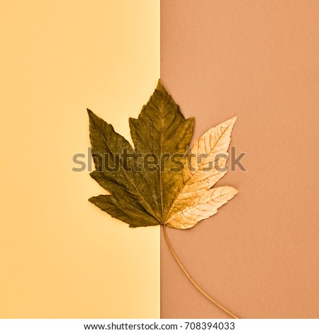 Autumn Arrives. Fall Leaves Background. Fall Fashion Design. Art Gallery. Minimal. Flat lay. Green Yellow Maple Leaf. Autumn Vintage Concept #708394033
