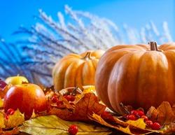 Autumn art composition - varied dried leaves, pumpkins, fruits, rowan berries on natural bright background. Autumn, fall, halloween, thanksgiving day concept. Autumn still life