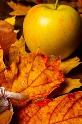 Autumn art composition - varied dried leaves, pumpkins, fruits, rowan berries on wooden background. Autumn, fall, halloween, thanksgiving day concept. Autumn still life