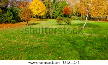 autumn at backyard and garden #521211343
