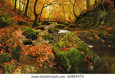 Autumn at Stockghyll in the English Lake District