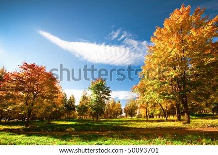 Autumn at the morning park