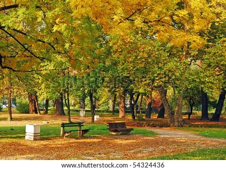Autumn at the park
