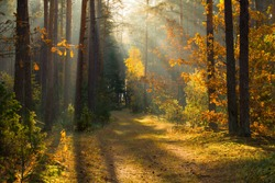 Autumn. Autumn forest. Forest with sunlight. Path in forest through trees with vivid colorful leaves. Beautiful fall background. Fall scenery. Fall wonderland.