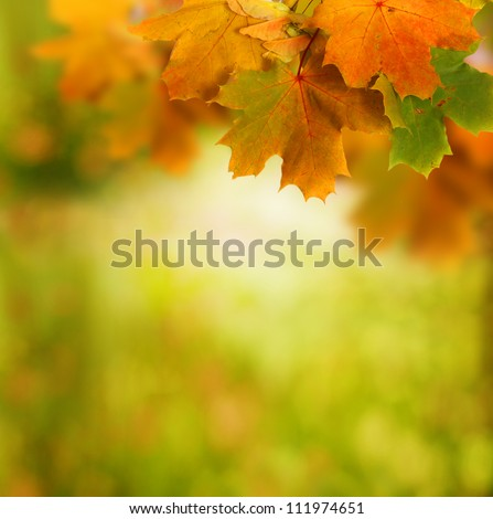 autumn background #111974651