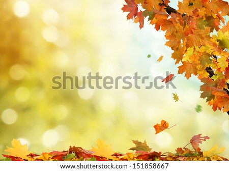 autumn background  #151858667