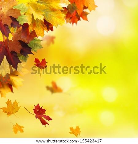 autumn background  #155423417