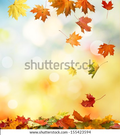 autumn background  #155423594