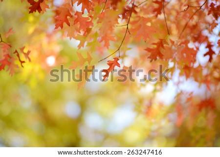 autumn background #263247416
