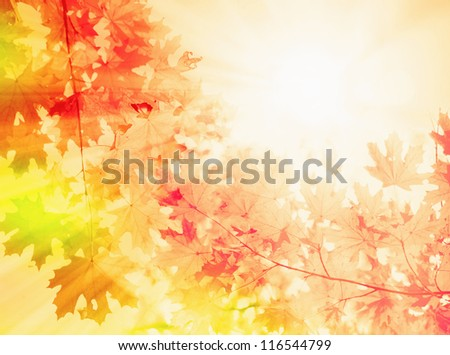 Autumn background, abstract nature pattern #116544799