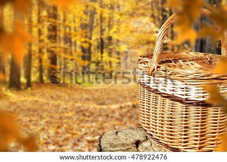 autumn background and space for your decoration  #478922476