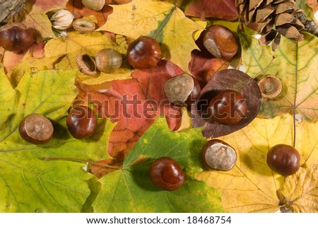 Autumn background (chestnuts, acorns and pinecones on autumn leaves)