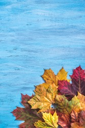 Autumn Background composition for print design. Happy Thanksgiving frame with clorful maple leaves on blue wooden board