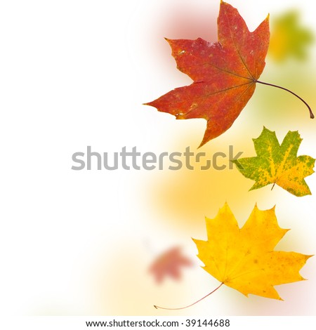 Autumn background from leaves of different colour and forms