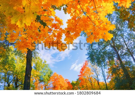 Photo of  Autumn background landscape. Yellow color tree, red orange foliage in fall forest. Abstract autumn nature beauty scene October season sun in heart shape sky Calm autumn season. Fall nature tree leaves