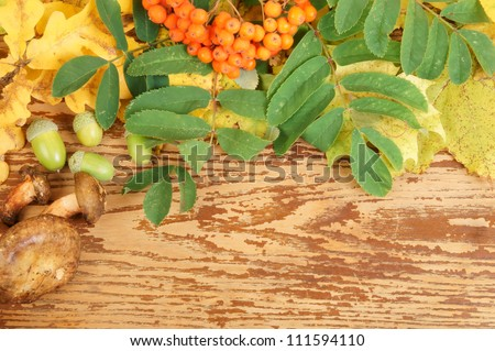 Autumn background, leaves, mushrooms, ashberry on wooden table