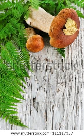 Autumn background: mushroom and fern