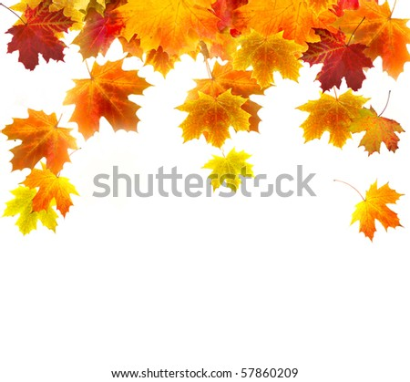 Autumn background of colored leafs border isolated
