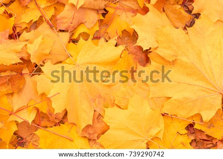 Autumn background of yellow leaves #739290742
