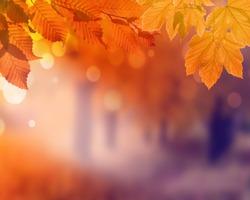 Autumn background. Orange leaf in autumn park on a blurred background.