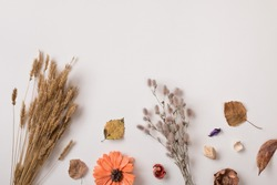 Autumn background: set of dry autumn plants and leaves, dried petals and flowers, simple rustic branches and wheat bunch on white with copy space for text from top. Top view. Flat lay.