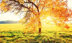 Autumn background. Tree with colorful foliage in morning sunlight. Vibrant autumn natural scene.