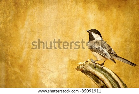 Autumn background with a chickadee perched on a pumpkin with copy space.