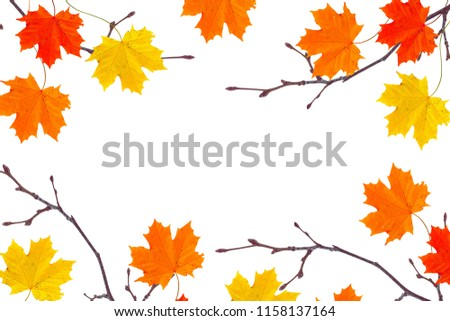 Autumn background with bright colorful leaves. Indian summer.