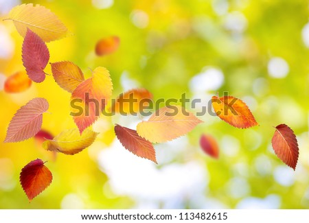 Autumn background with falling and spinning leaves