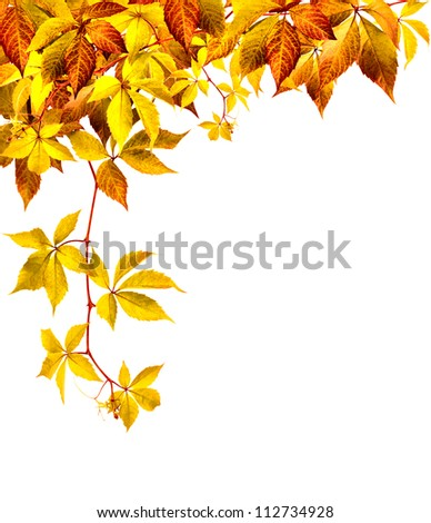 Autumn background with gold leaf on a white background