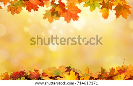 autumn background with maple leaves #714619171