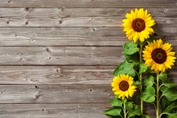 Autumn background with sunflowers on wooden board