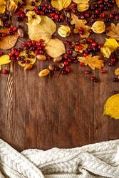 Autumn background: wood with oak leaves and acorns