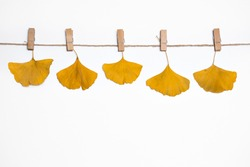 autumn background, yellow fallen leaves of ginkgo tree hanging on clothespins on a rope, falling leaves, autumn discounts and sales