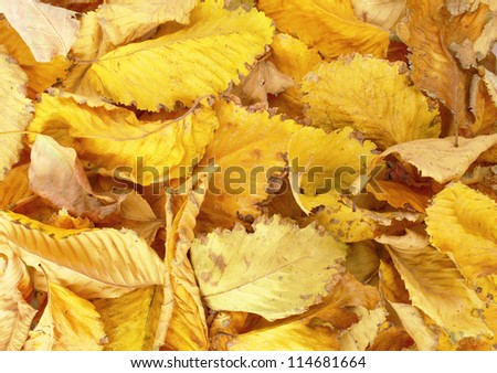 Autumn background. Yellow leaves