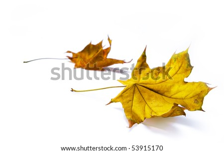autumn backgrounds - stock photo