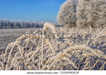 Autumn. Beautiful landscape. The weather is nice. Blue sky. Frost. Frost #1504940639