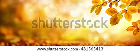 Autumn beech leaves decorate a beautiful nature bokeh background with forest ground, wide panorama format #481565413