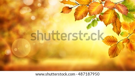 Autumn beech leaves decorate a beautiful nature bokeh background with glowing sunlight and blurred trees